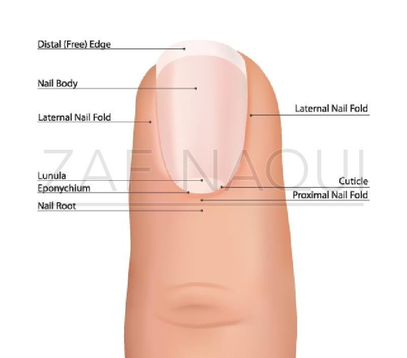 Zaf Naqui | Nail Bed Injury